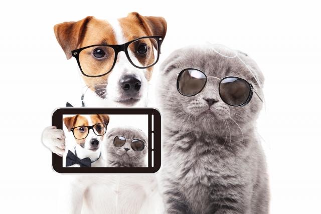 イヌネコ眼鏡